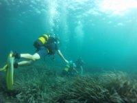 潜水探索海底潜水实践