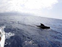 鲸类在船旁