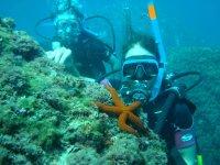 first dives
