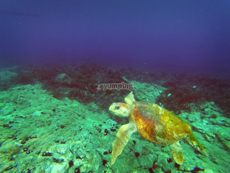 ger龟浮潜时