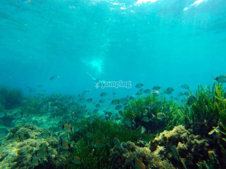 阿尔梅里亚海岸的透明底部