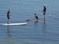 Llevando al perro en la tabla de paddle surf