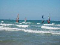 Several windsurf sails