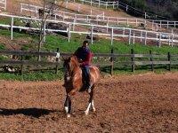 Ruta a caballo, Sierra Aracena y Picos de Aroche