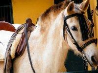 Enjoy the horse riding routes