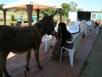 Acariciando al burro