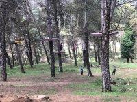 Views of the tree park