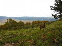 马在草地上