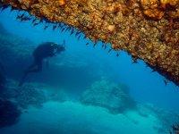 Contemplando la flora marina