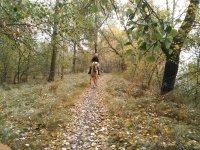 El bosque de Valladolid