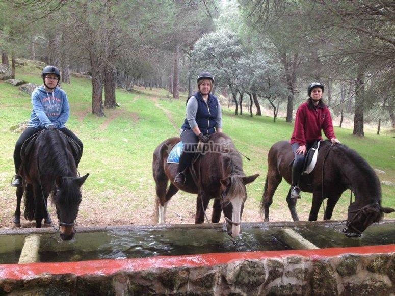 Parada para que los caballos beban