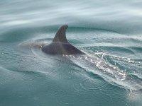 海豚表演的标志Dreamsail