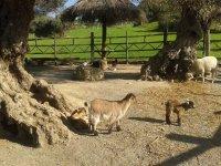 Safaris para toda la familia