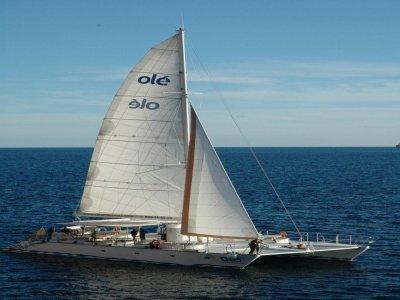 Catamarán Olé
