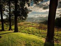 Vinedo Pazo