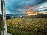 Vinedo near the winery
