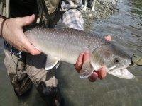 pez pescado cuatro