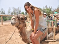 Disfruta de los camellos en Fuerteventura