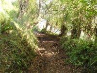 Recorre estrechos y sorprendentes caminos
