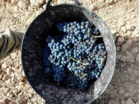 The first steps of the winery