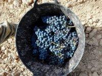 Grape pick-up
