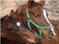 Clases de equitacion y actividades con caballos