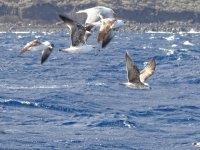 海鸥拍打着