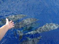 从船上刷海豚