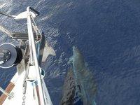 Navegando junto a los delfines en barco