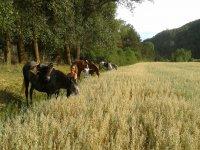 a caballo por el prado