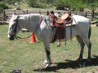 caballo con montura