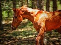 nuestro caballo marron