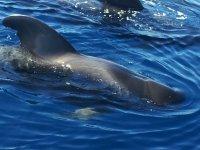 乘船游览的鲸鱼和更多动物