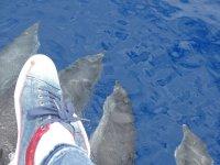 Viendo delfines desde el barco