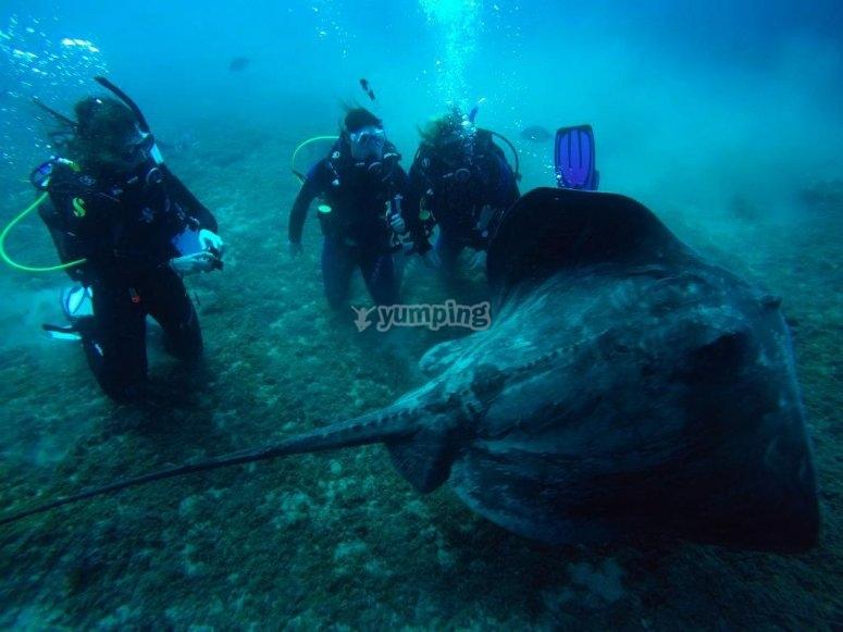 - 集团水肺潜水的潜水