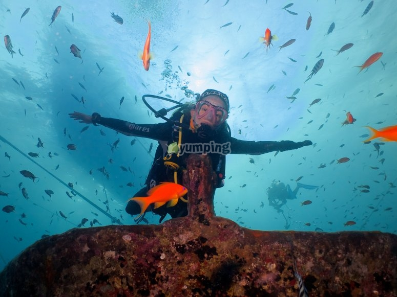 在鱼中潜水