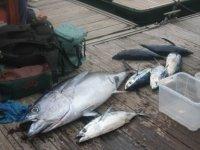 钓鱼的最佳日子