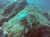 Nudibranquio en el fondo marino