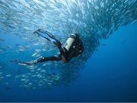 Submarinista bajo el banco de peces