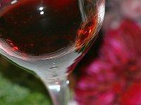 Copa de vino en la bodega