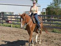 familiarizando con el caballo