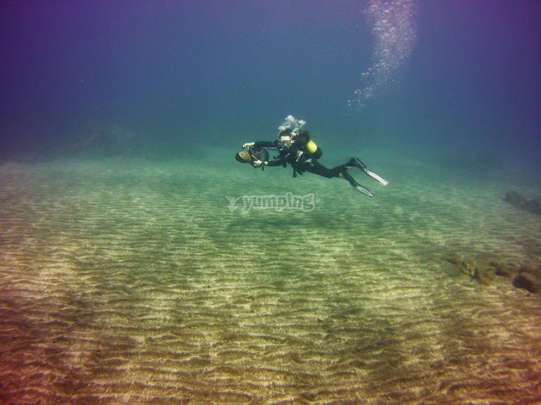 Diving in the Coast of Tenerife