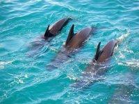 Avvistamento di delfini