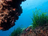 Costa Brava - fondo marino
