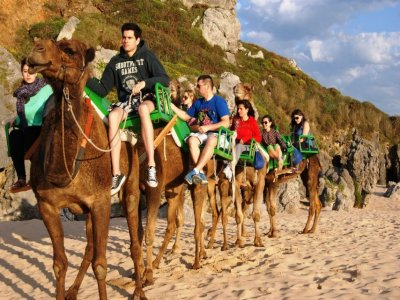 Dromedary riding tour in Cantabria 1h