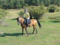 Disfruta de las mejores rutas a caballo
