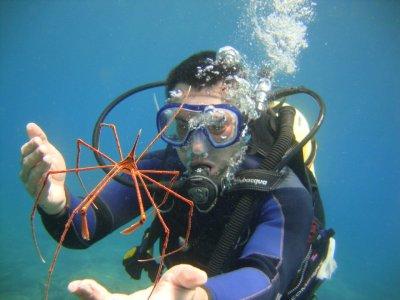 Bautismo de buceo en la costa de Adeje Tenerife