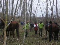 Disfruta de las rutas a caballo