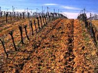 The land where wine comes from