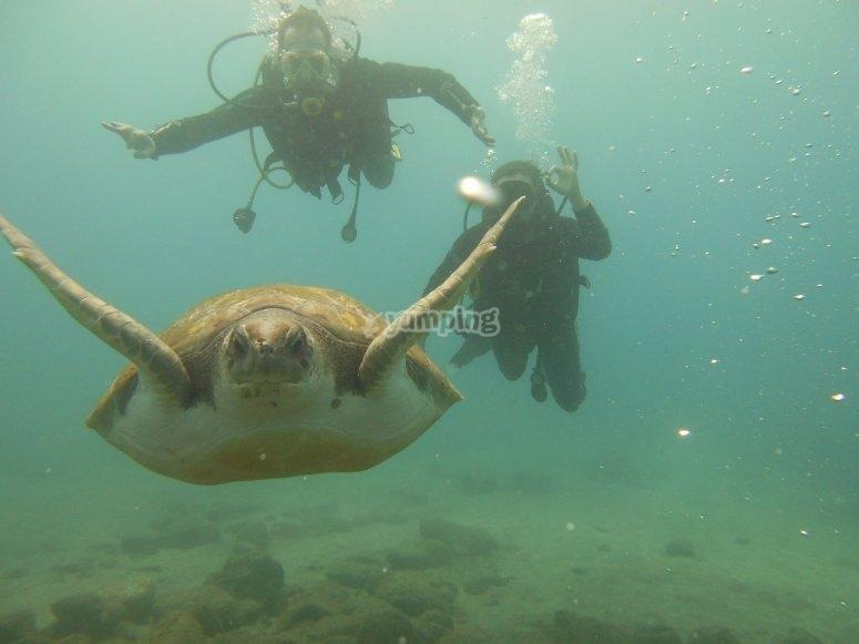 Buceando detras de la tortuga